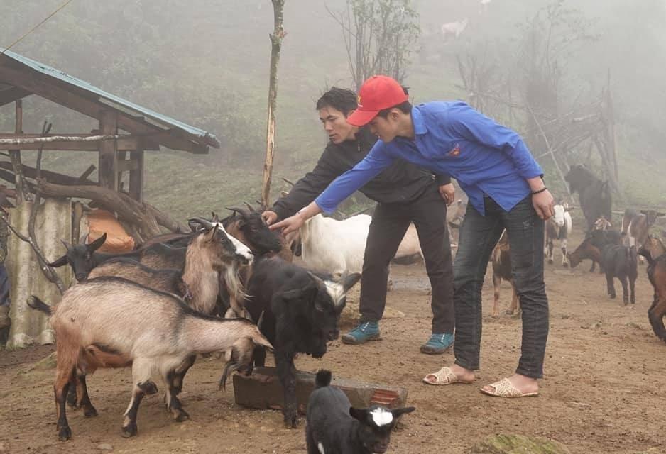 Vốn vay ưu đãi giúp gia đình chính sách ở huyện Mù Cang Chải giảm nghèo (Trong ảnh: Mô hình chăn nuôi dê của đoàn viên trẻ Hờ A Dì).