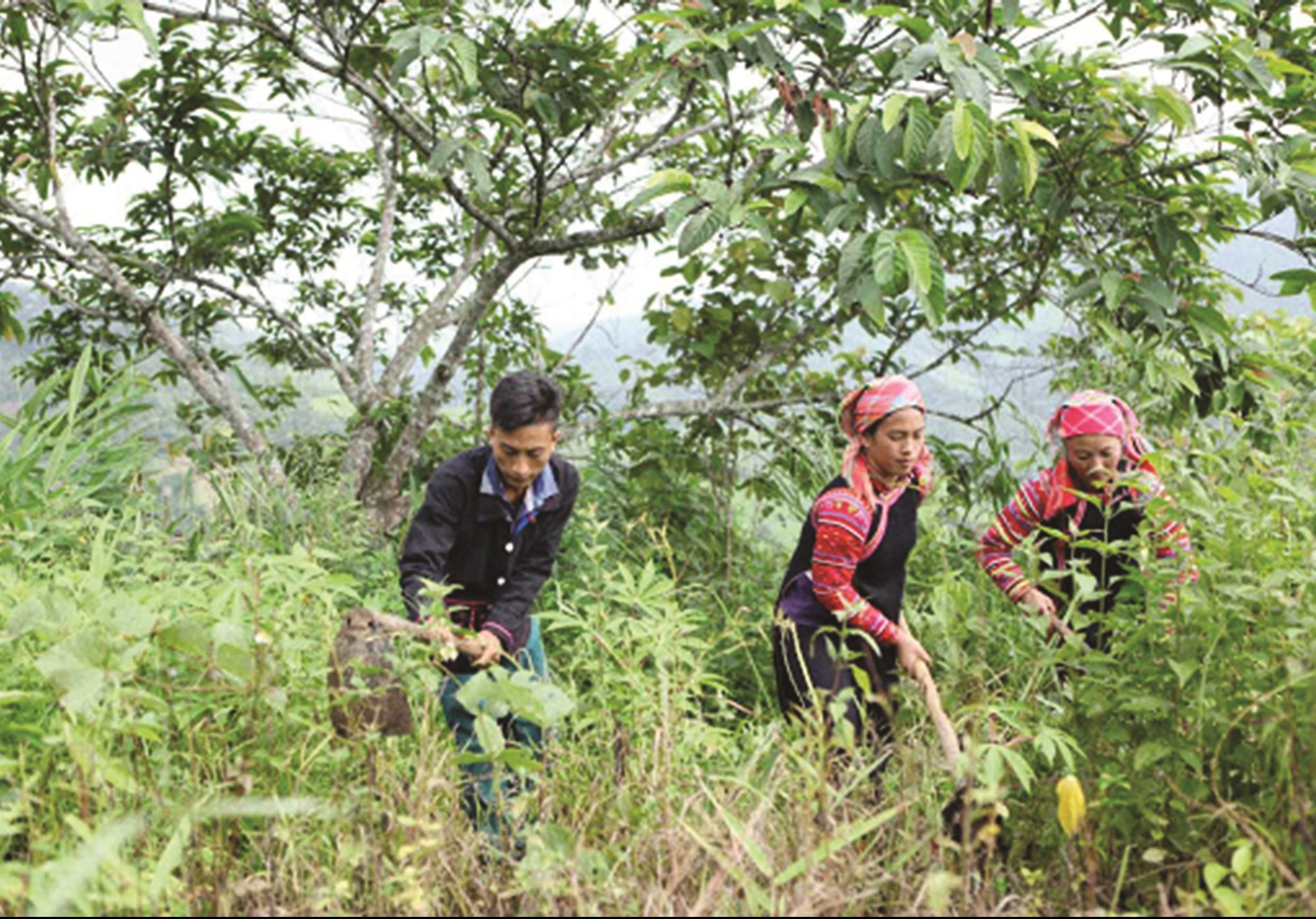 Sản xuất lâm nghiệp vừa phát triển kinh tế, vừa gắn với bảo vệ rừng.