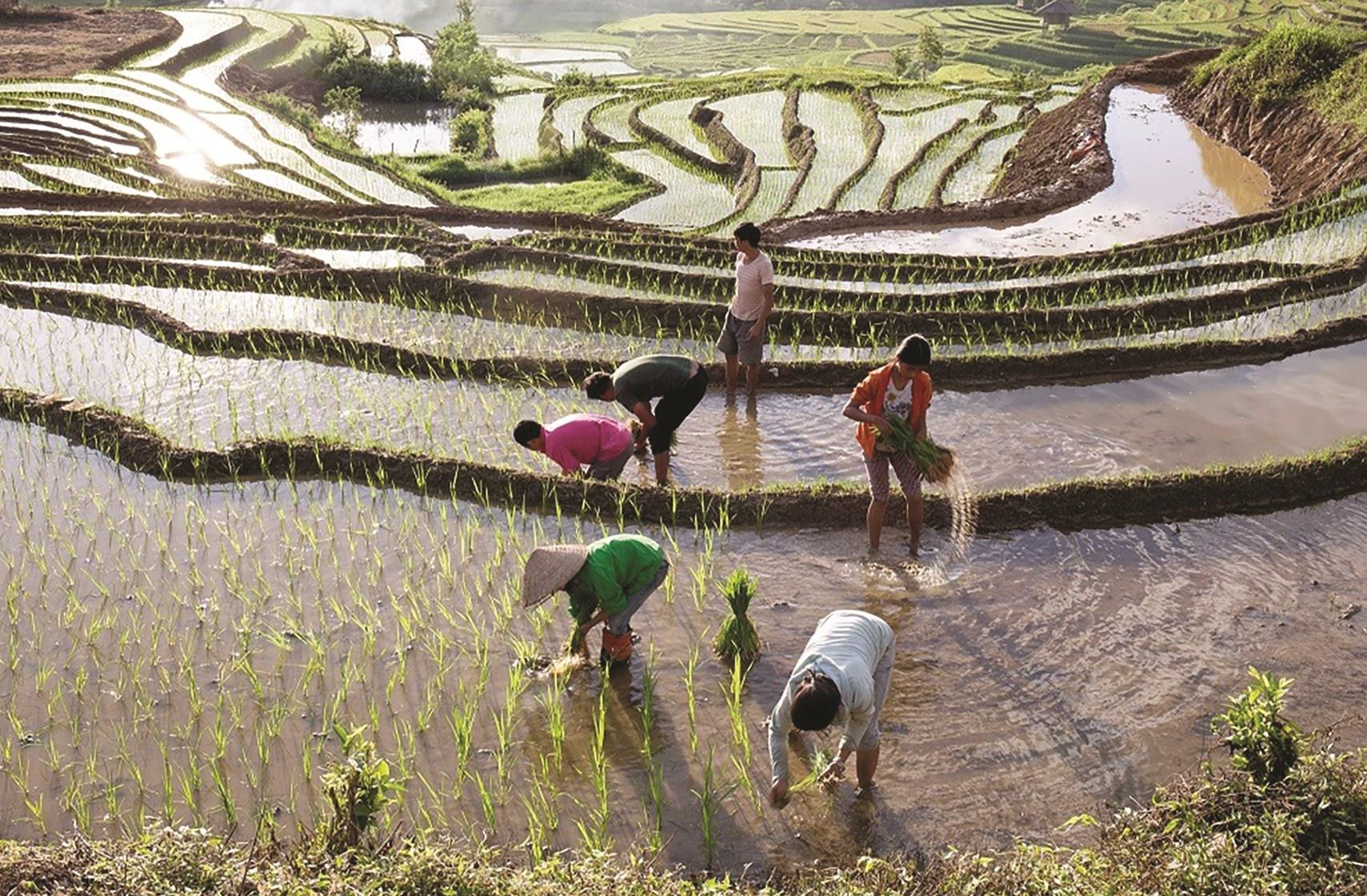 Nông dân Yên Bái tích cực ra đồng sản xuất, đảm bảo mùa vụ