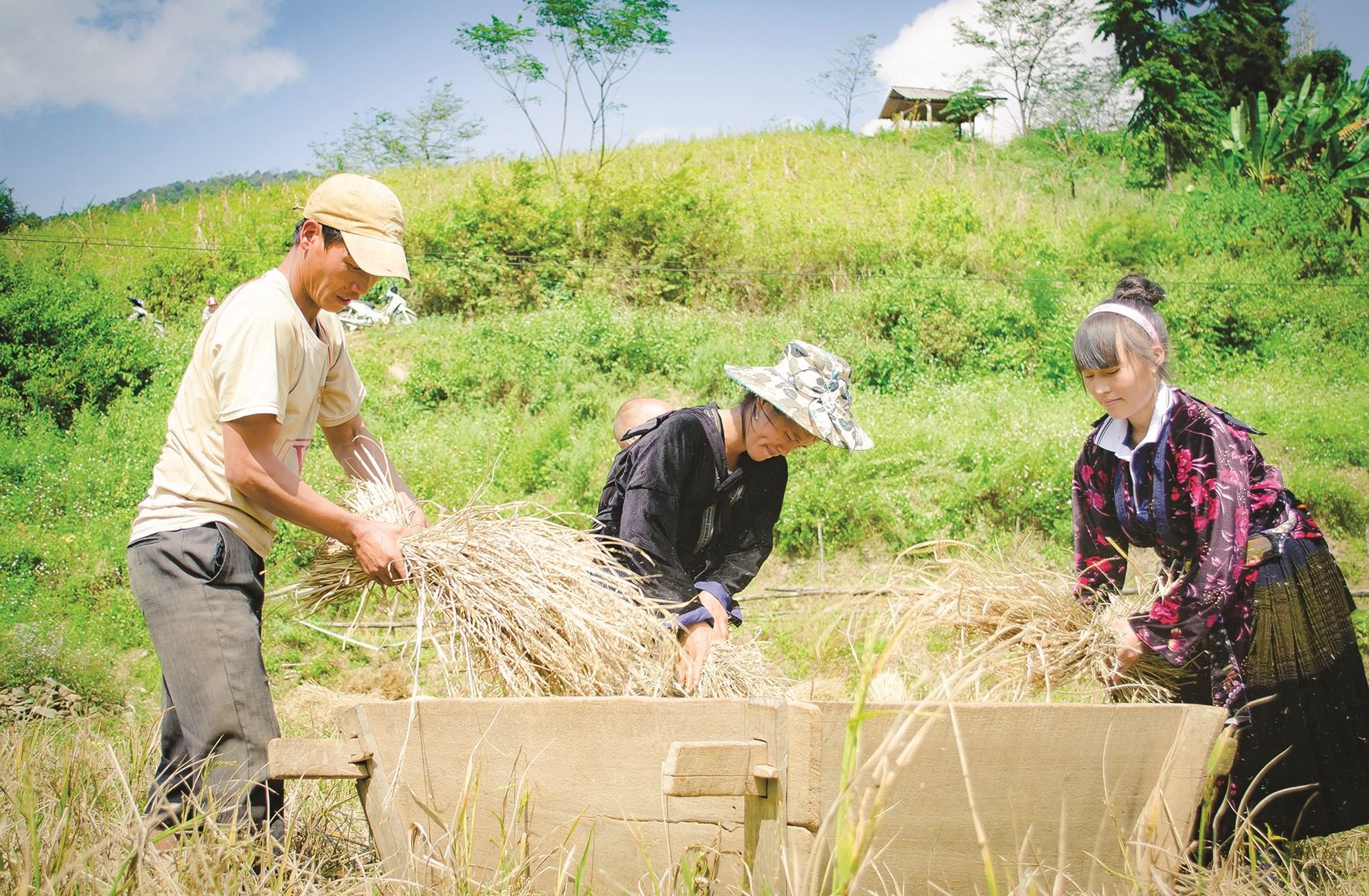 Chính sách hỗ trợ tiền khai hoang, phục hóa ruộng bậc thang đã giúp gia đình ông Thào Phá Sình, xã Phì Nhừ có thêm 200m2 ruộng canh tác