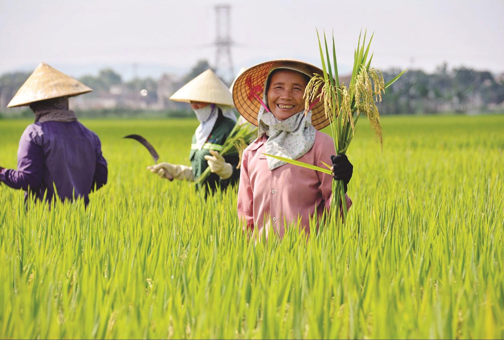 Bảo đảm lợi ích và mức sống cho người trồng lúa là việc phải làm. (Ảnh minh họa)
