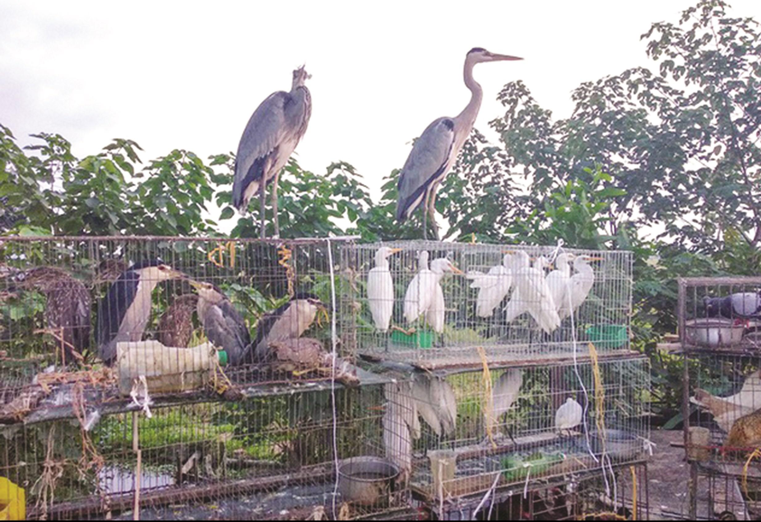 Chợ chim thiên nhiên được bày bán công khai trên đại lộ Thăng Long (Hà Nội).