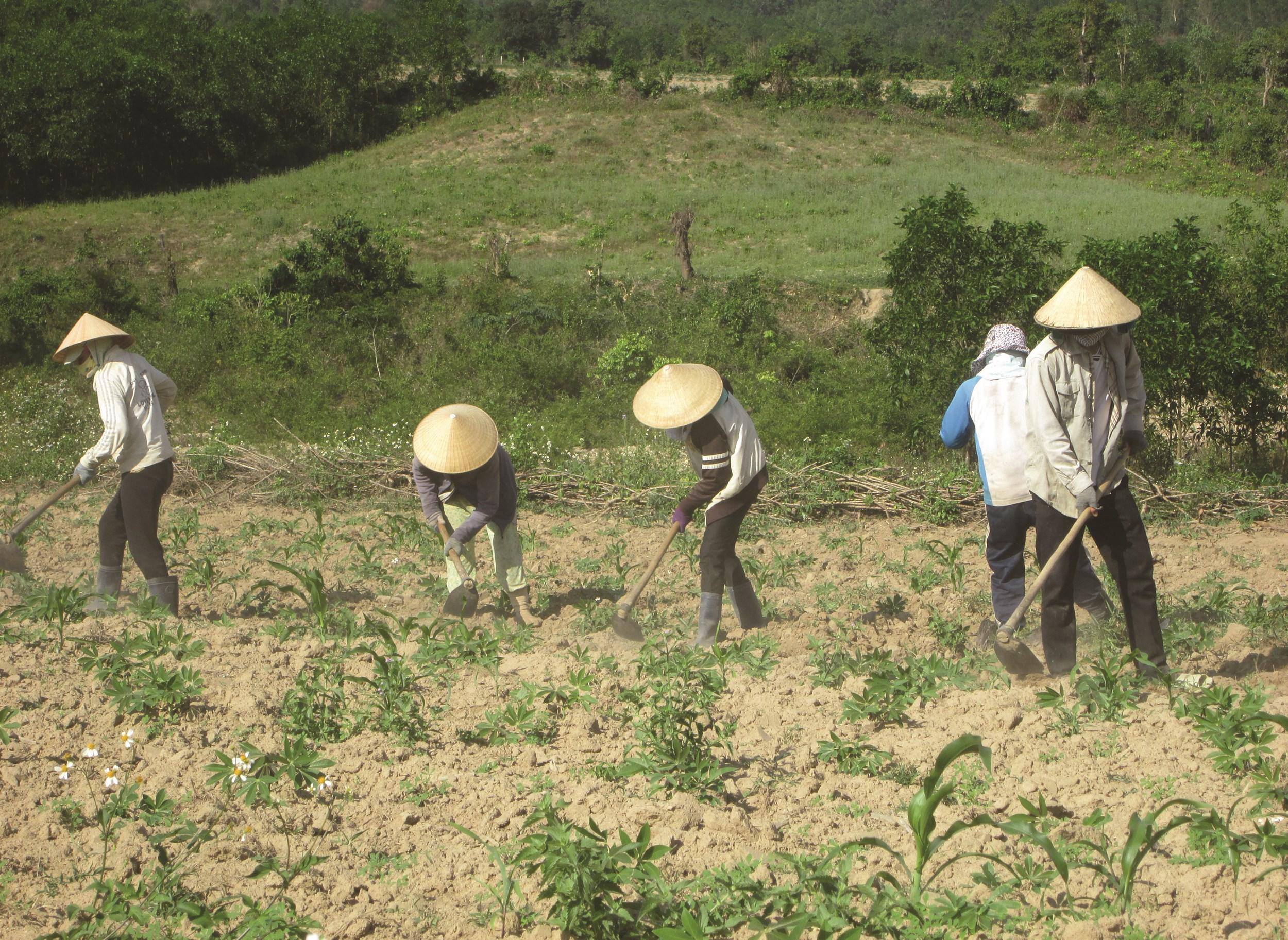 Những hộ đồng bào DTTS ở Canh Thuận sống chủ yếu dựa vào nương rẫy nên cuộc sống còn nhiều khó khăn.