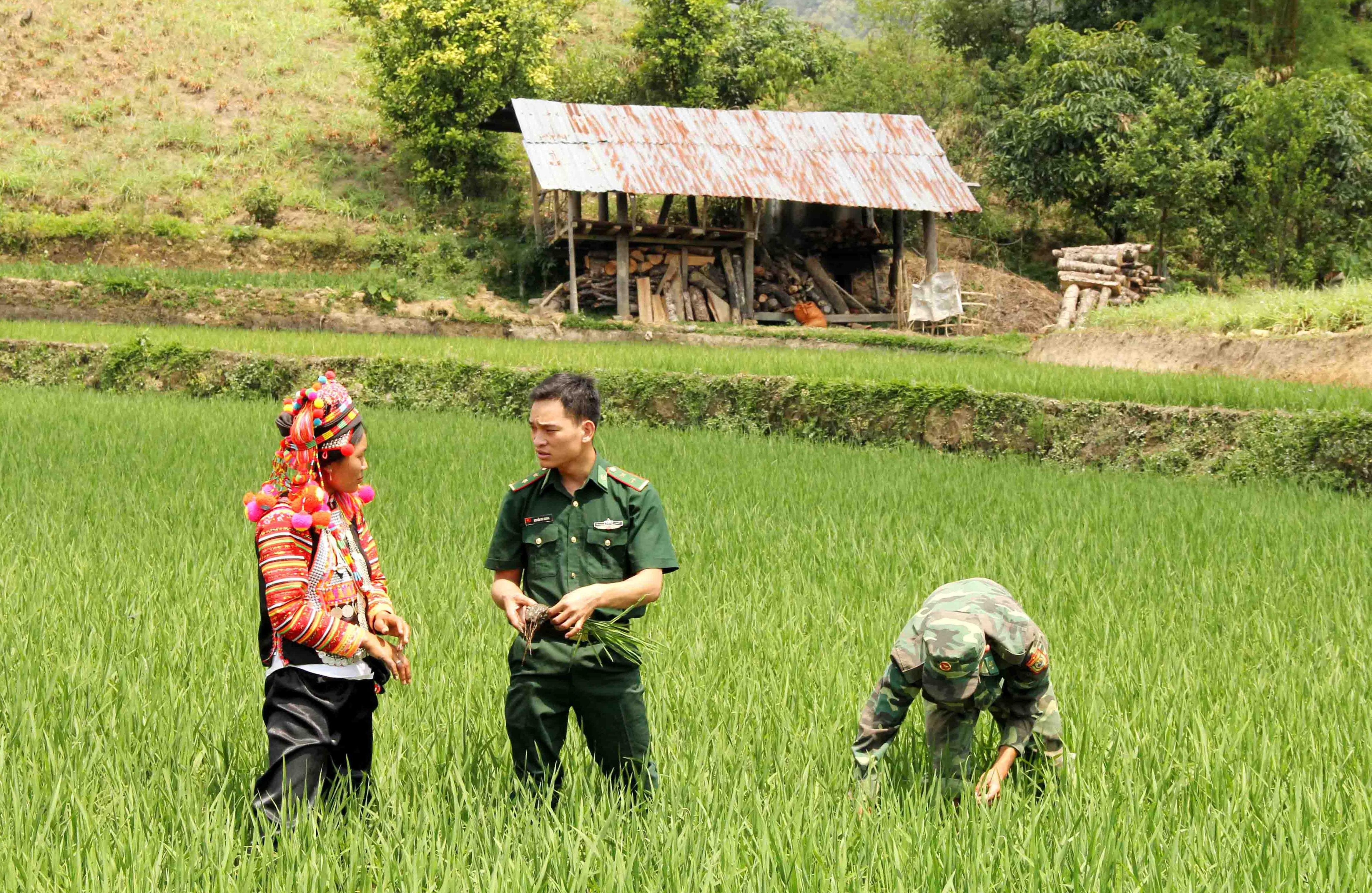 BĐBP hướng dẫn người dân bản Hà Xi, xã Pa Ủ trồng lúa nước. (Ảnh tư liệu)