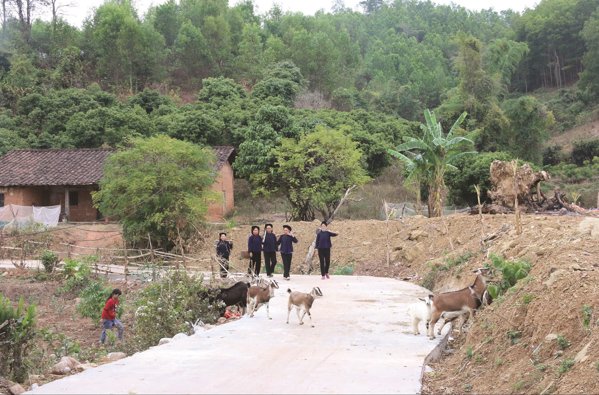 Cùng với các xã ĐBKK trên địa bàn cả nước, tại Bắc Giang nhiều công trình cơ sở hạ tầng phân cấp cho cơ sở làm chủ đầu tư đã phát huy hiệu quả. (Trong ảnh: Đường giao thông nông thôn ở Bắc Hoa, xã Tân Sơn, Lục Ngạn được xây dựng từ nguồn vốn Chương trình 135)