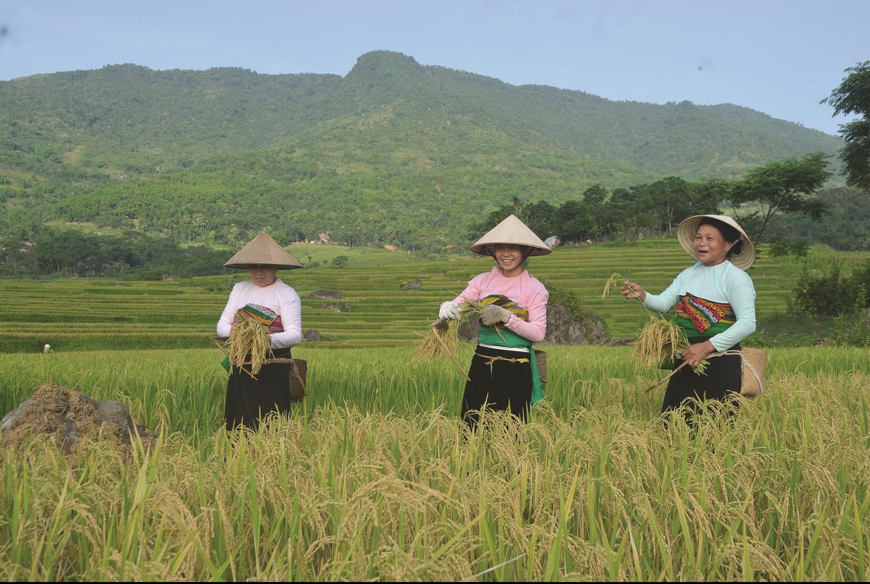 Đồng bào vùng DTTS và miền núi của tỉnh Thanh Hóa luôn khắc ghi lời Bác, nỗ lực tăng gia sản xuất, phát triển kinh tế. (Ảnh minh họa)
