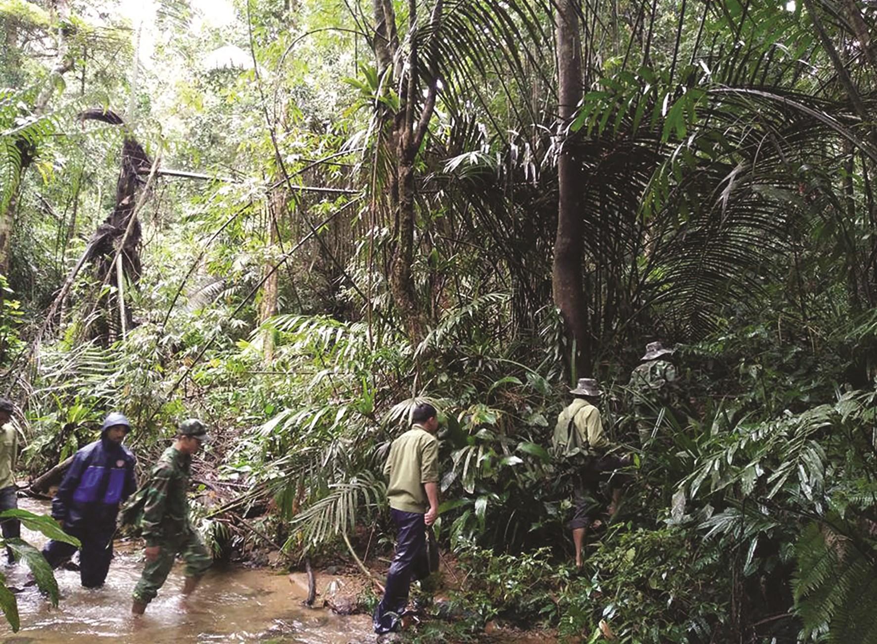 Người dân cùng các lực lượng tham gia tuần tra bảo vệ rừng ở A Lưới.