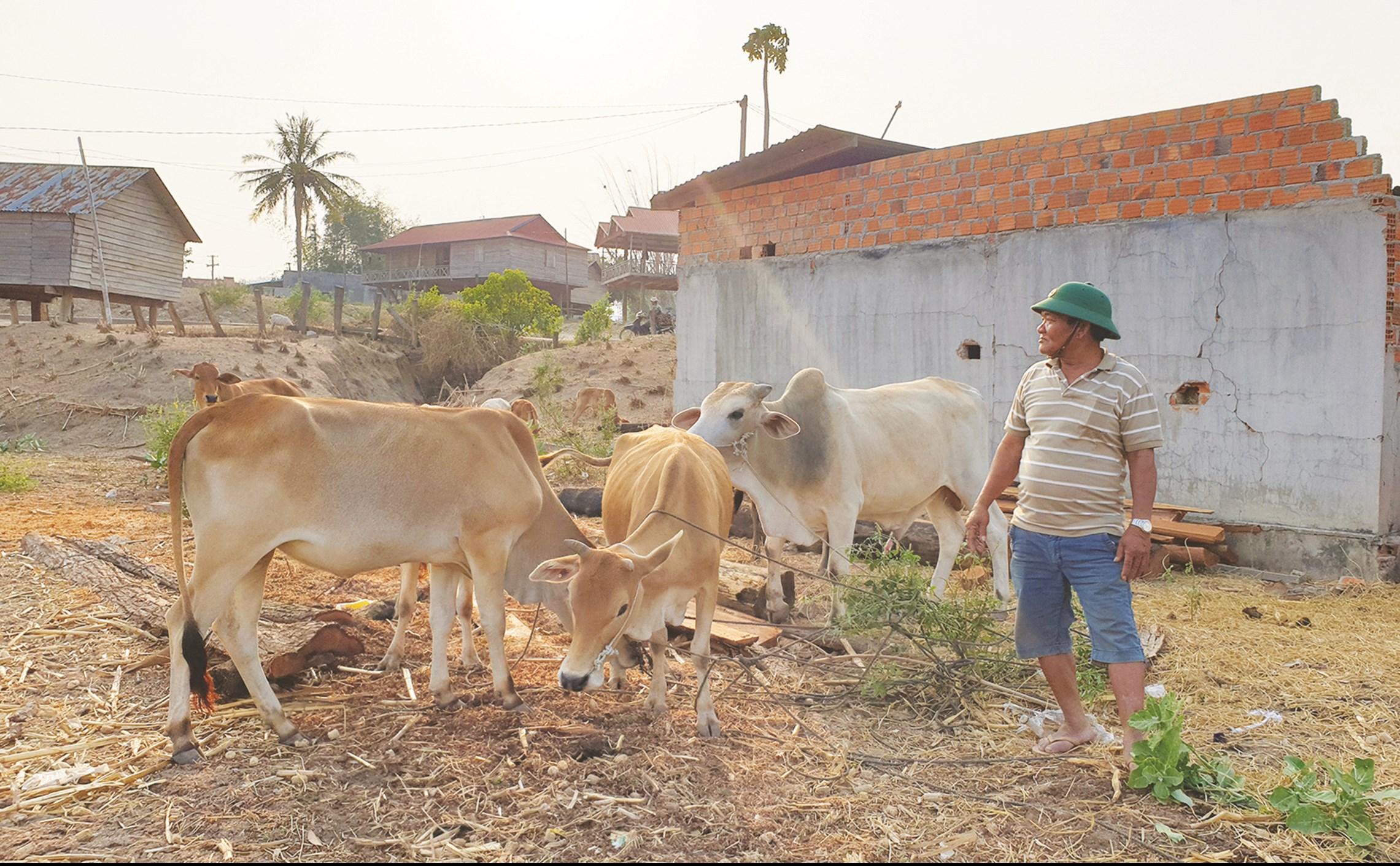 Tại làng Vơn, ông Đinh Văn Chiêm là tấm gương làm kinh tế giỏi. Hiện nay ông có 5 sào lúa, 3ha mì và 20 con bò