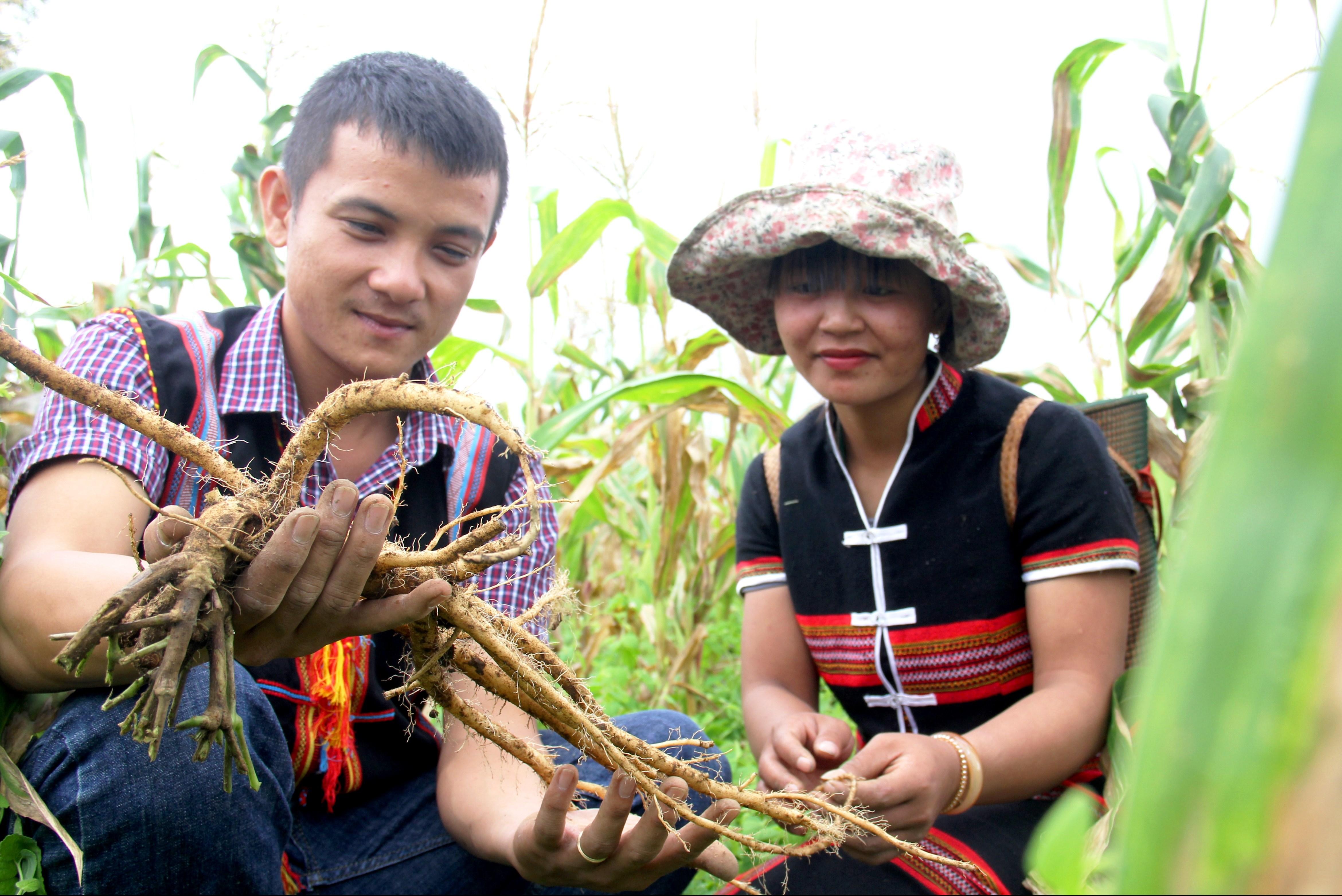 Từ chính sách hỗ trợ của Nhà nước, nhiều mô hình phát triển kinh tế ở Tây Giang được chú trọng, góp phần nâng cao thu nhập cho đồng bào địa phương.