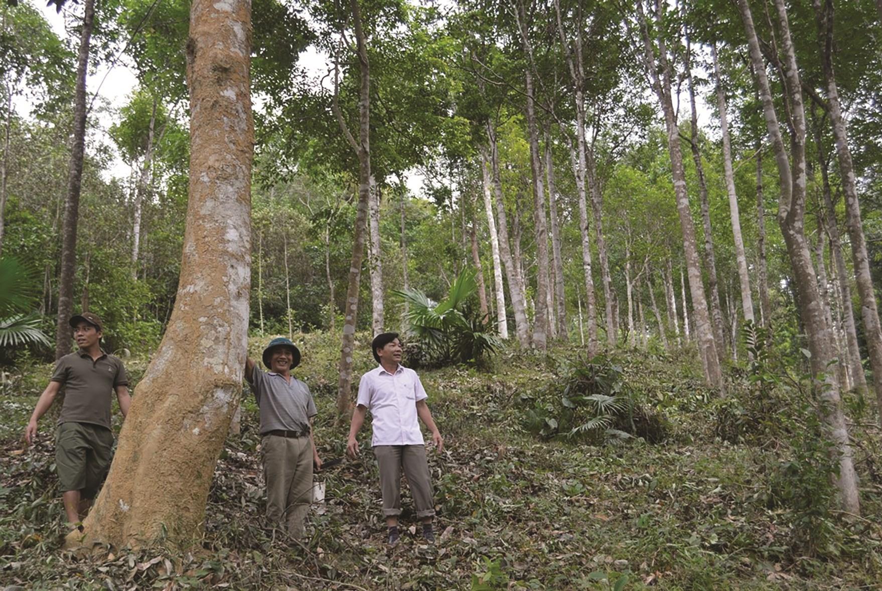 Trồng rừng kinh tế là một trong những chương trình trọng tâm của Đảng bộ huyện Minh Hóa.