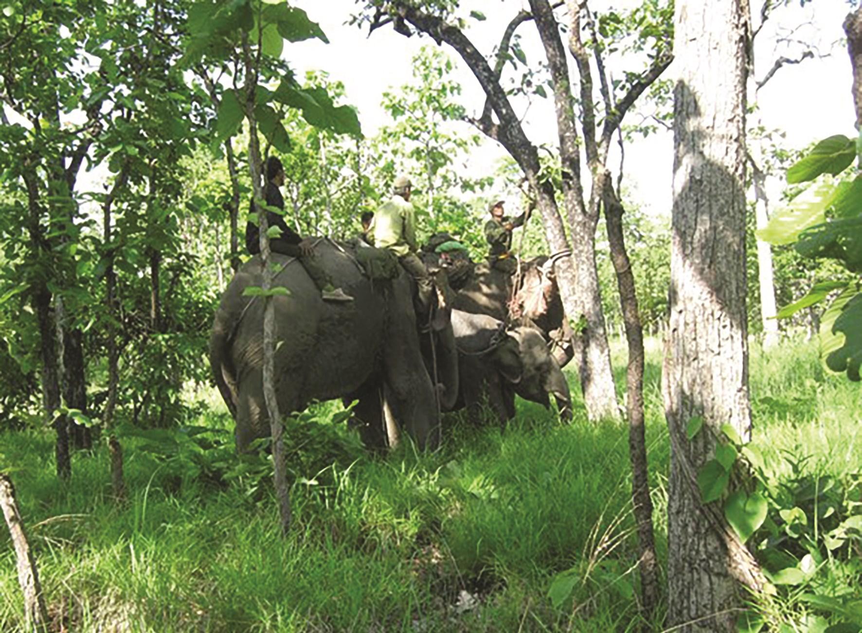 Bảo tồn loài voi Tây Nguyên cần sự vào cuộc của cả cộng đồng.
