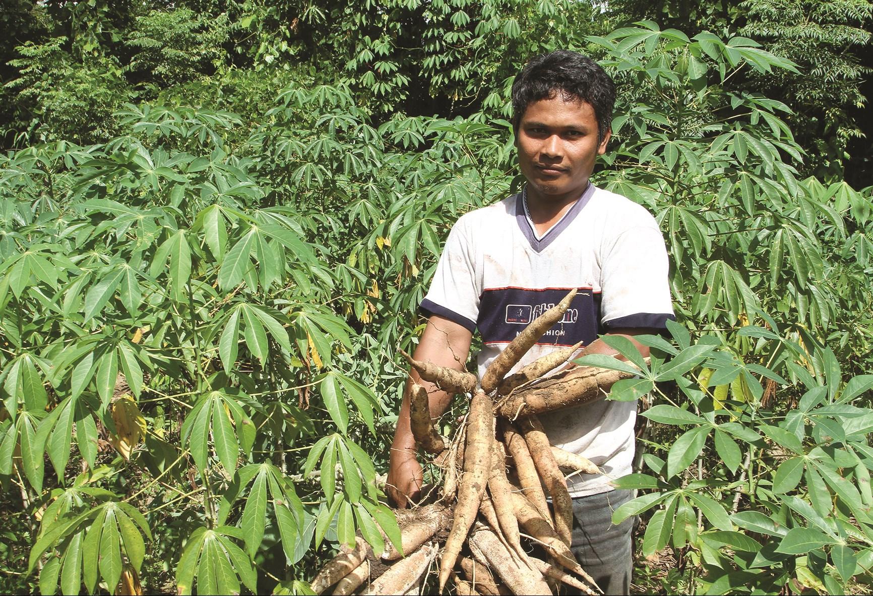 Việc quy hoạch vùng nguyên liệu mì (sắn) gắn với xây dựng nhà máy chế biến giúp người dân có thu nhập ổn định.