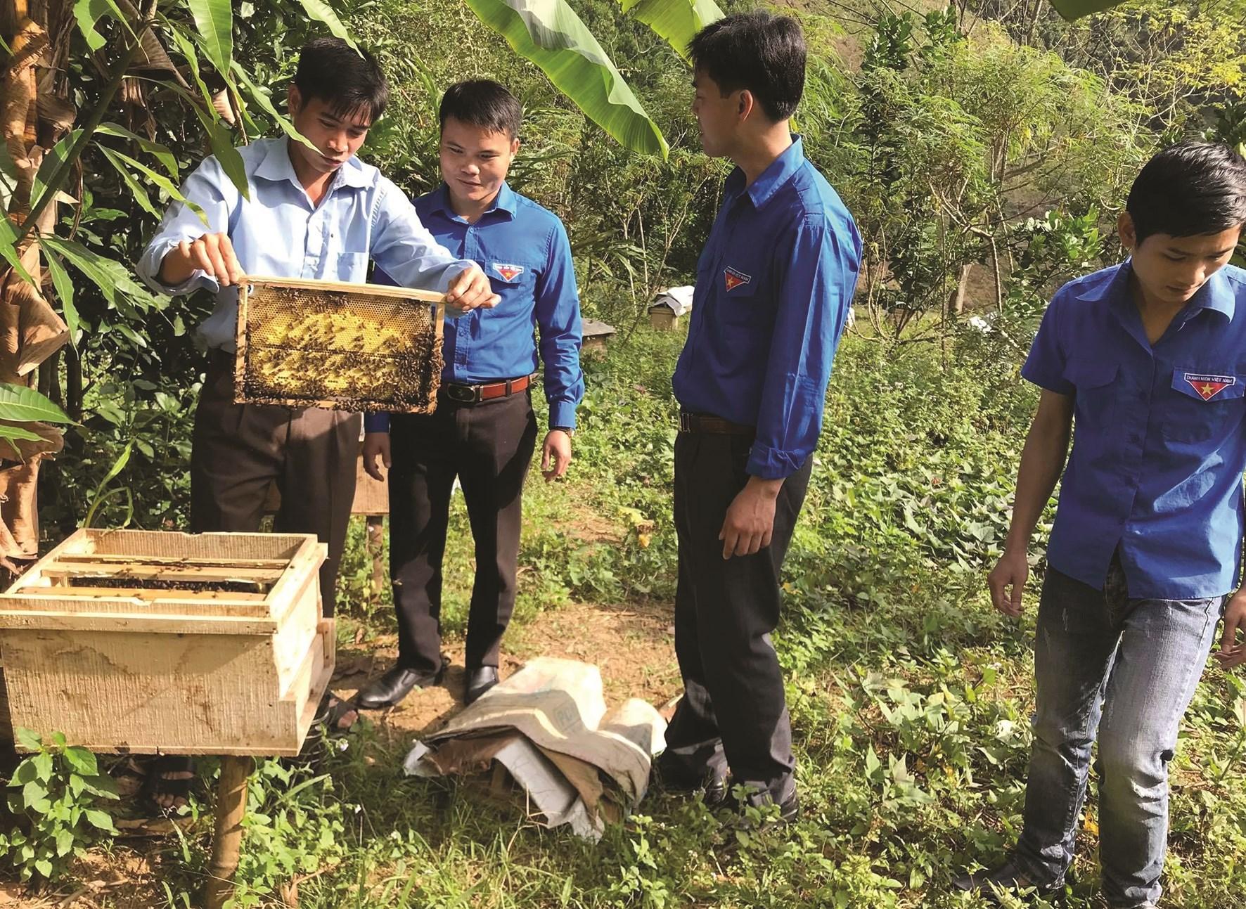Cán bộ Phòng Nông nghiệp huyện Kim Bôi hướng dẫn thành viên HTX Nông nghiệp xanh Kim Bôi mô hình nuôi ong sáp trong nông nghiệp xanh