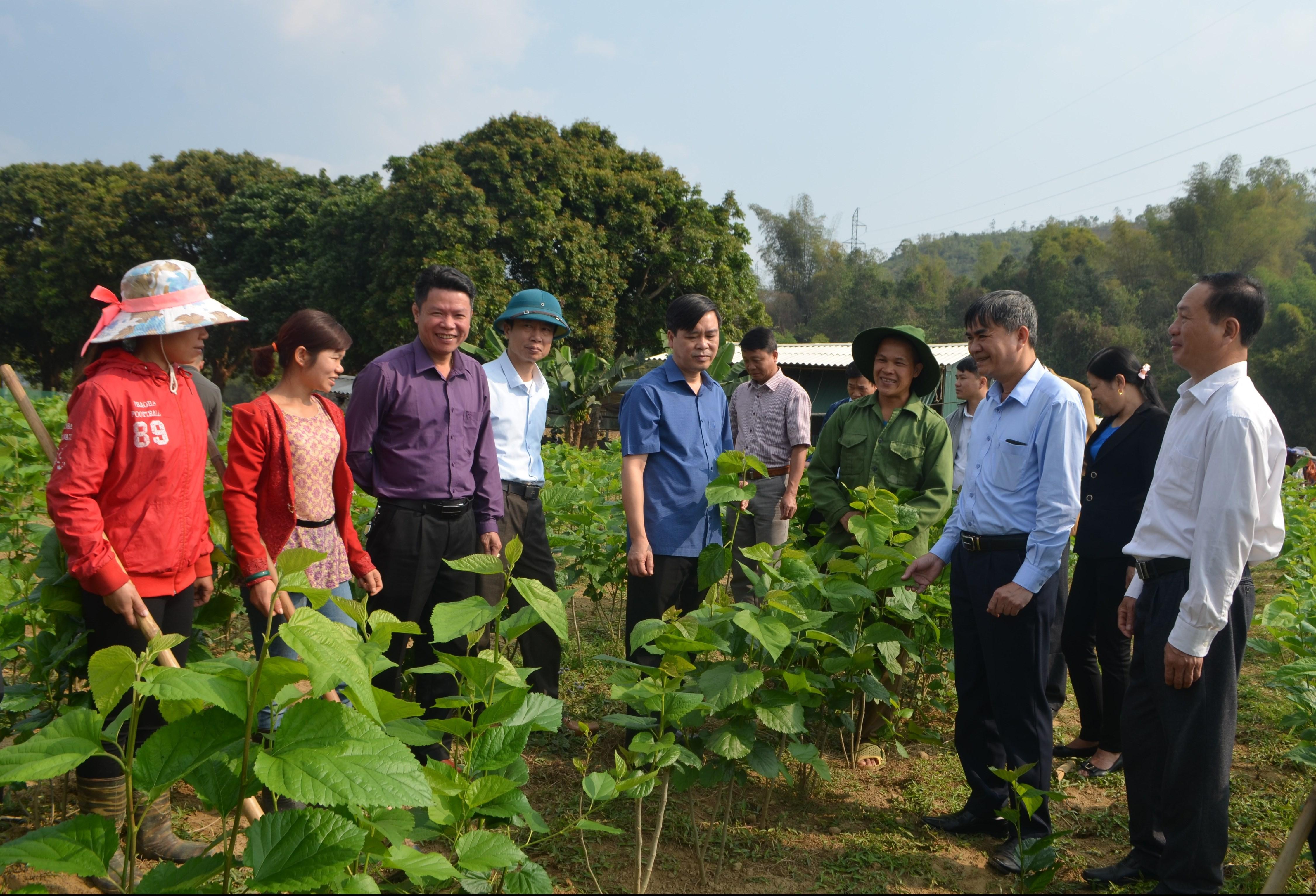 Ông Chu Đình Ngữ, Bí thư Huyện ủy (thứ 3 từ bên trái) và ông Mai Trọng Tuân, Phó Bí thư, Chủ tịch UBND huyện Văn Chấn (thứ 5 từ bên phải) cùng cán bộ huyện thăm quan mô hình trồng dâu tại thị trấn nông trường Liên Sơn