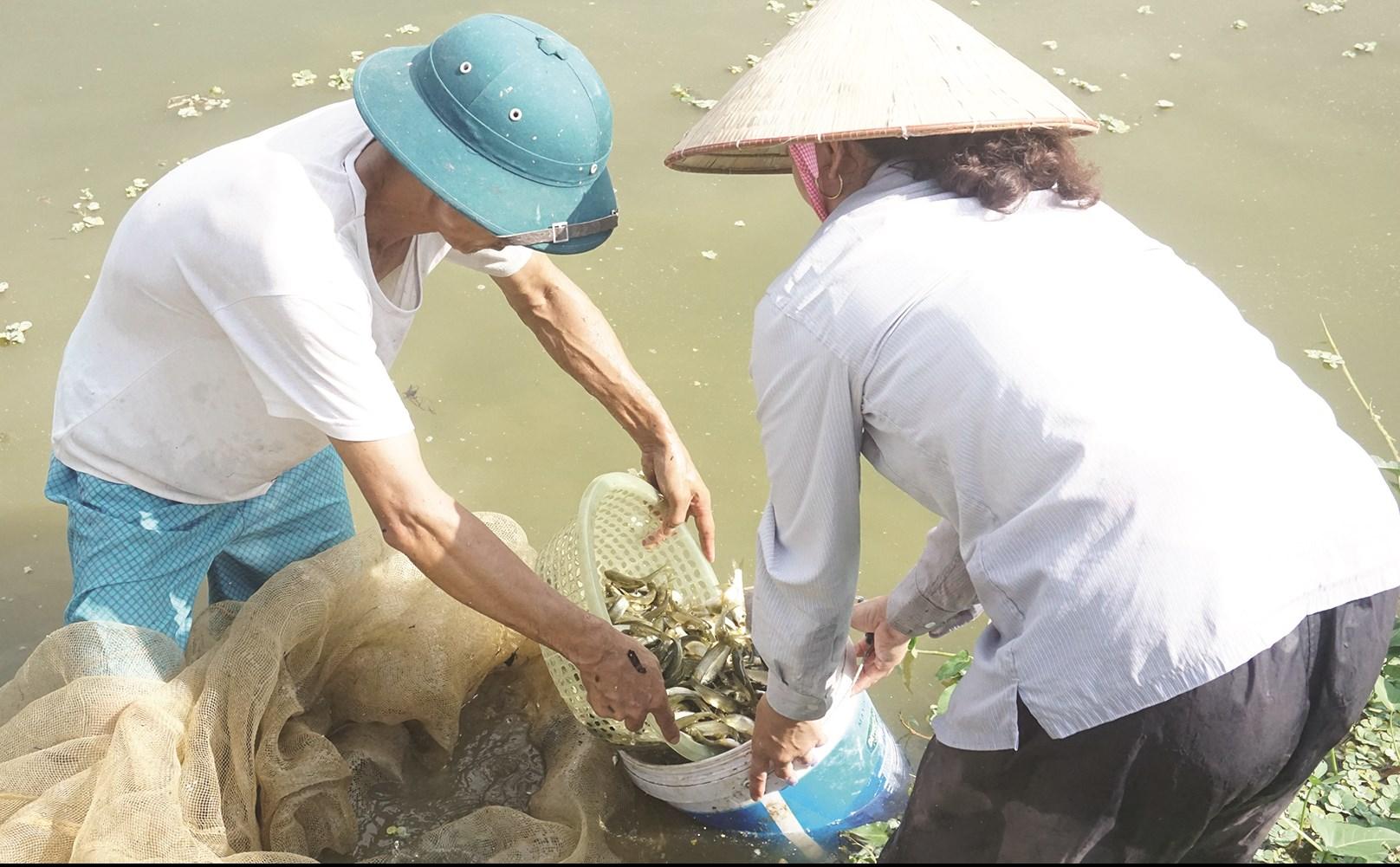 Mỗi năm gia đình ông Chiến thu nhập khoảng 40 triệu đồng từ ương, nuôi, bán cá giống