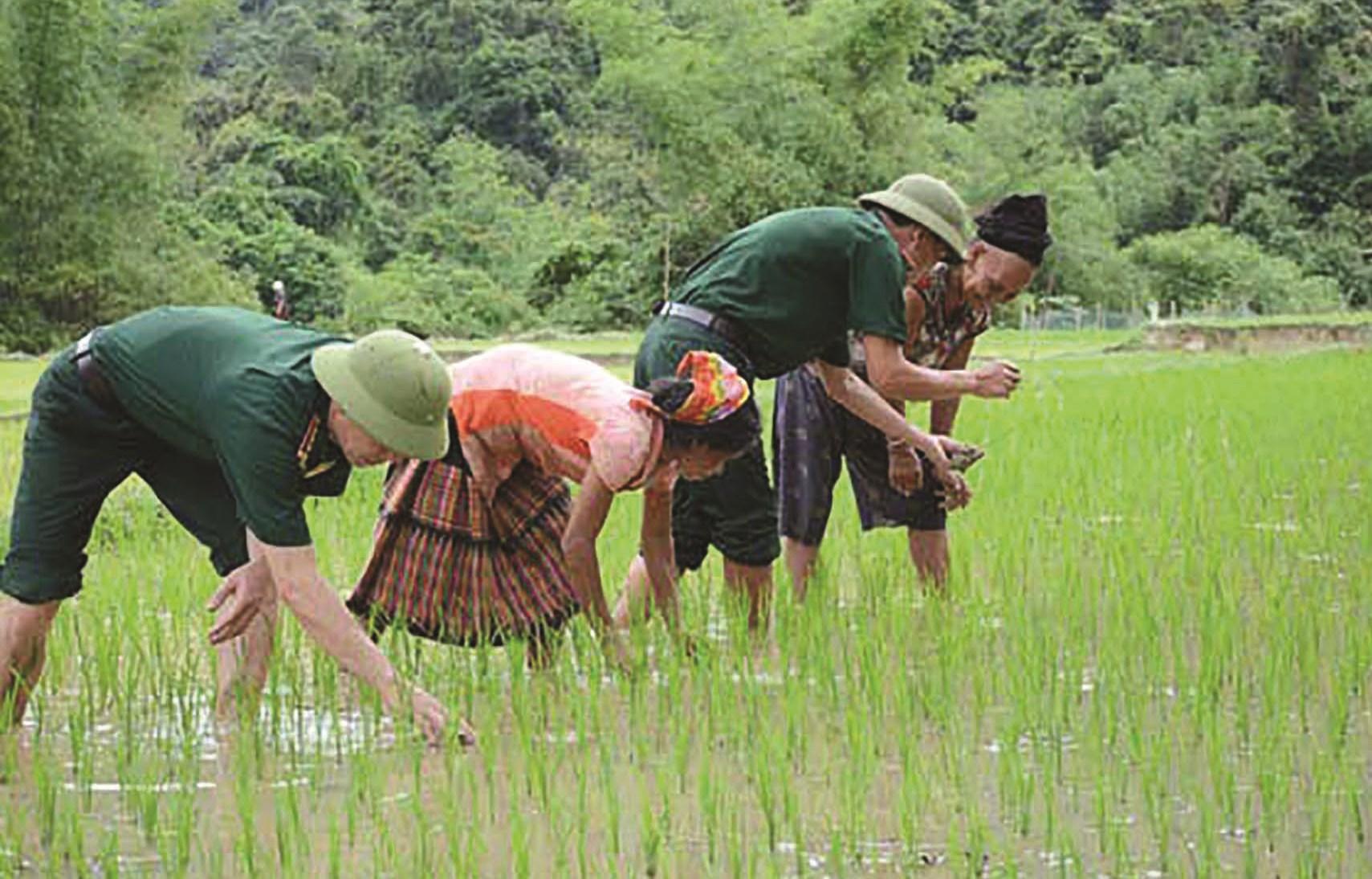 BĐBP hướng dẫn bà con Đan Lai làm lúa nước