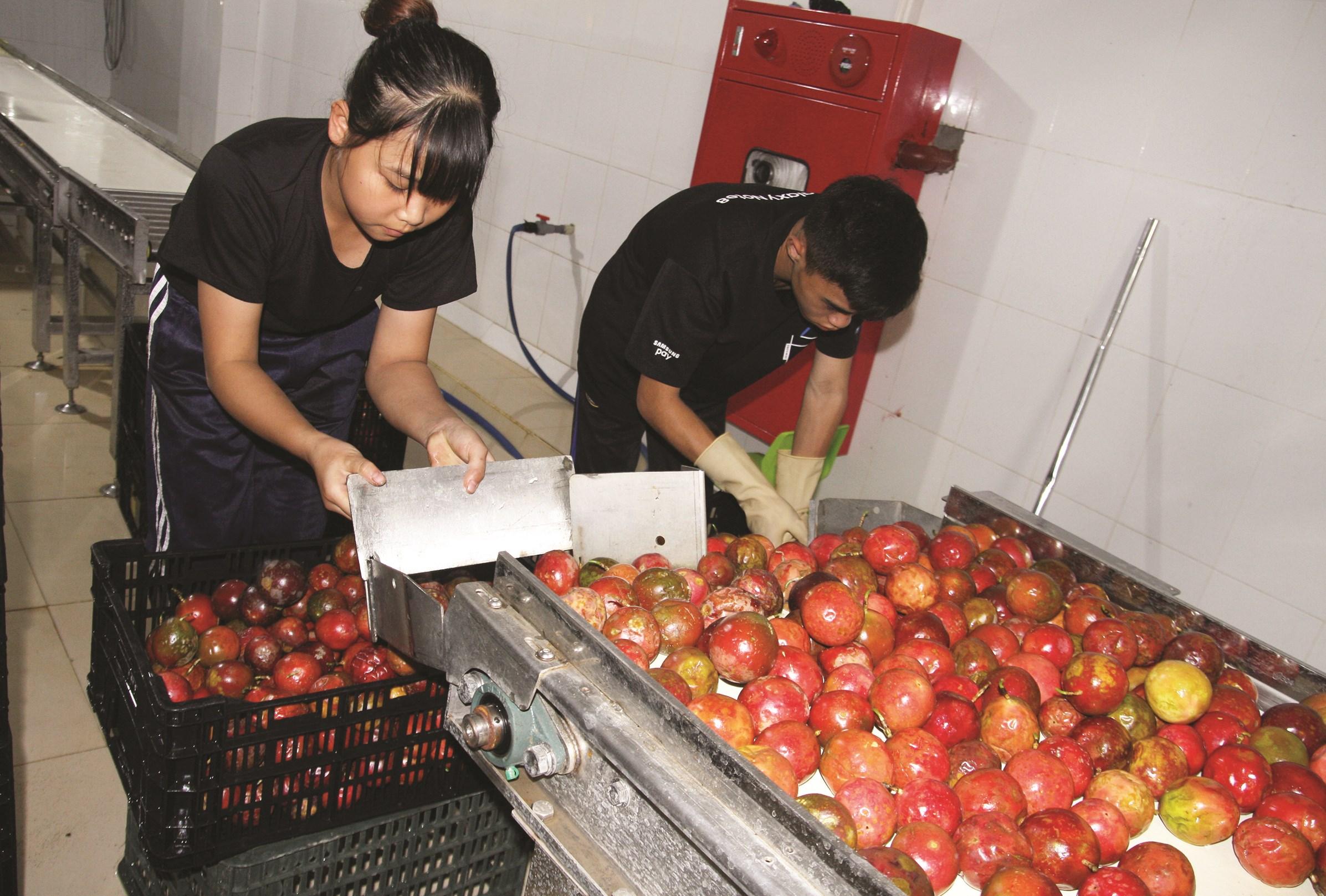 Công nghiệp chế biến nông sản xuất khẩu sẽ là hướng tiêu thụ ổn định cho nông sản Việt