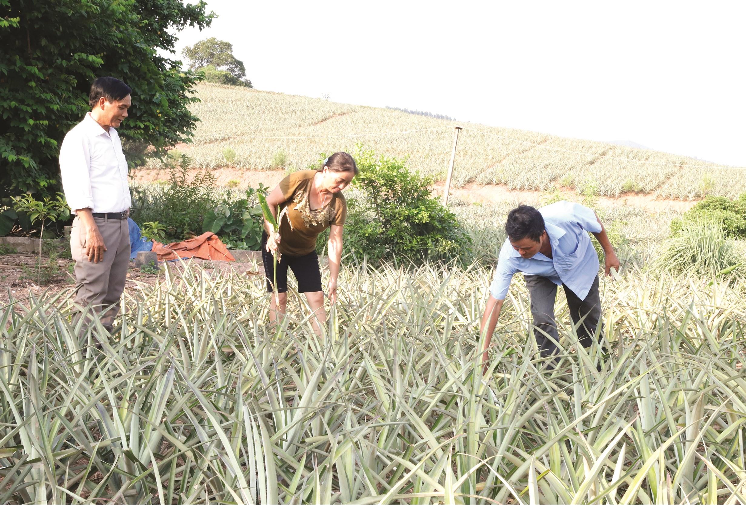 Người dân ở thôn Đồng Cống, xã Bảo Sơn, huyện Lục Nam được hỗ trợ vốn vay phát triển cây dứa mang lại hiệu quả kinh tế cao