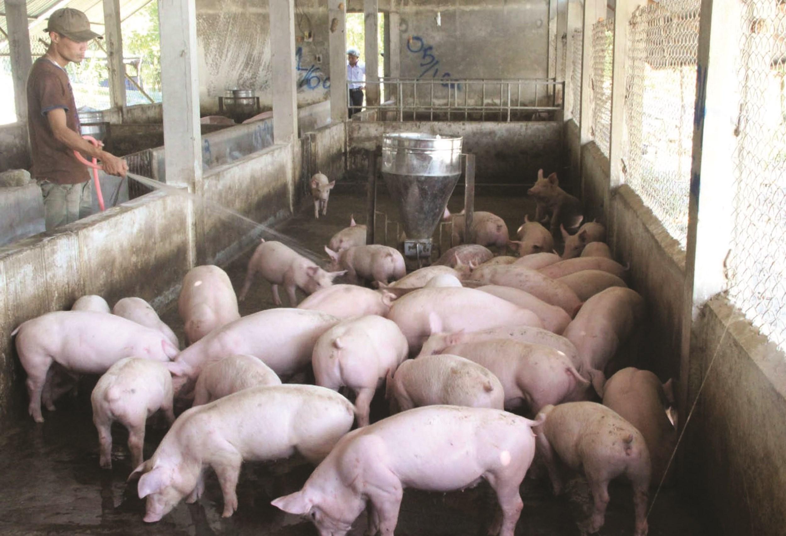 Bình ổn giá thịt lợn: Đâu là giải pháp thích hợp?