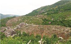 Nạn phá rừng Suối Tân, huyện Cam Lâm (Khánh Hòa): Chính quyền có làm ngơ