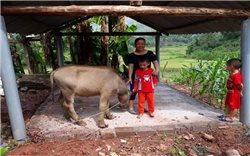 Mèo Vạc (Hà Giang): Tranh thủ nguồn lực Chương trình 135 vươn lên thoát nghèo