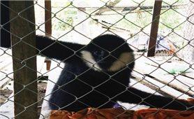 Nhức nhối nạn buôn bán động vật hoang dã quý hiếm