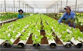 Chuyển hướng sản xuất nông nghiệp hữu cơ