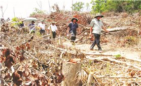Quản lý, bảo vệ rừng ở Phú Yên: Nhiều bất cập cần xử lý dứt điểm
