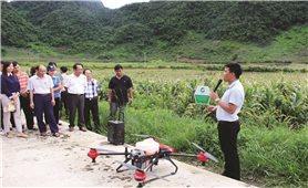 Sơn La: Áp dụng khoa học kỹ thuật để sản xuất lớn