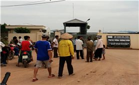 Phú Thọ: Trại gà gây ô nhiễm môi trường bị phạt hơn 400 triệu đồng