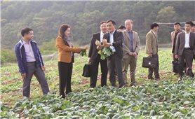 Cao Lộc (Lạng Sơn): Xây dựng nhãn hiệu cho rau, củ quả sạch