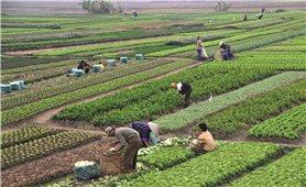 Yên Bái: Đẩy mạnh ứng dụng KH&CN vào sản xuất