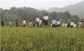 Vùng đồng bào DTTS Lai Châu: Đổi thay mạnh mẽ sau 5 năm thực hiện Quyết tâm thư