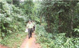 Yên Bái: Giữ màu xanh cho rừng phòng hộ