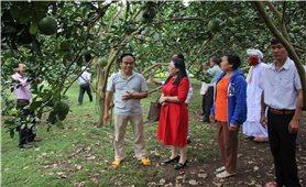 Đồng Nai: Chàng trai Chơ Ro thu tiền tỷ từ trồng bưởi da xanh an toàn