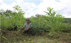 Khánh Hòa: Vì sao trồng rừng theo Nghị định 75/2015/NĐ-CP không đạt như kỳ vọng?