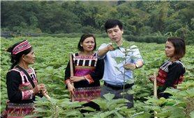 Lào Cai: Tạo sinh kế giúp phụ nữ ổn định cuộc sống