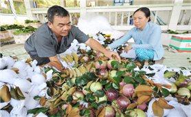 Cần Thơ: Áp dụng quy trình sản xuất sạch, nông sản có đầu ra ổn định
