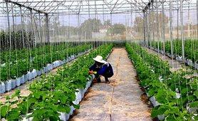 Xây dựng các vùng sản xuất nông nghiệp hữu cơ tại Tây Ninh