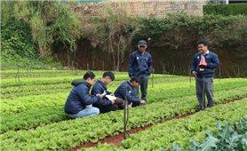 Tập đoàn Lộc trời và Công ty Syngenta Việt Nam: Giới thiệu 80 chủng loại giống mới cho nông dân