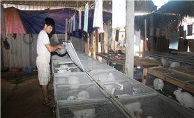 Chàng thanh niên dân tộc Mường làm giàu từ nuôi thỏ