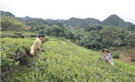 Phát huy vai trò hợp tác xã ở vùng DTTS và miền núi: Hình thành và phát triển chuỗi giá trị nông sản xuất khẩu (Bài 2)