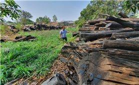 Hơn 1.000m3 gỗ trục vớt rồi bỏ không ở Ea Súp (Đăk Lăk): Ai chịu trách nhiệm?