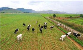 Công ty Cổ phần Sữa Việt Nam (Vinamilk): Vững vàng nội địa, tiến công xuất khẩu