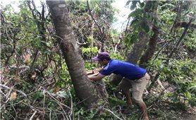 """Bình Định: Rừng tự nhiên bị """"cạo trọc"""", chính quyền không hay biết"""