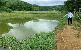 """Trang trại nuôi lợn gây ô nhiễm môi trường ở Thanh Hóa: """"Thanh đi, tra lại"""" vẫn gây ô nhiễm"""