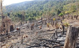 Chế tài đủ mạnh để rừng không bị tàn phá?