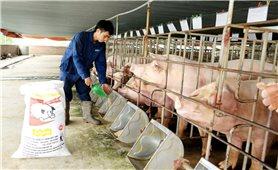 Bộ Nông nghiệp và Phát triển nông thôn: Bảo đảm nguồn cung và kiểm soát giá thịt lợn
