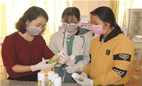 Nữ sinh ở Đăk Nông với sáng chế nước sát khuẩn từ cây dại