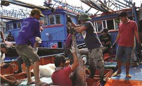 Khánh Hòa:  Nhiều giải pháp chống khai thác thủy sản bất hợp pháp